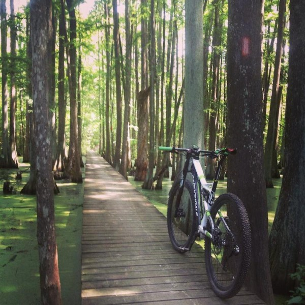 bikerumor pic of the day  the swamps of Chicot State Park in Louisiana. Great views of the swamp along the 22 mile trail