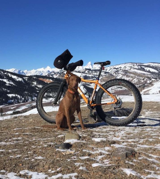 bikerumor pic of the day Here is a picture of my Chesapeake bay retriever,  Fatback Grand Teton, jackson hole.