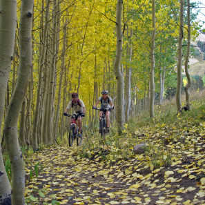 Wilderness_Aspens