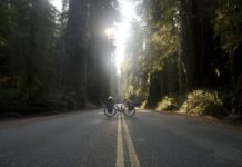 bikerumor pic of the day cycling through the redwoods on the Pacific Coast.