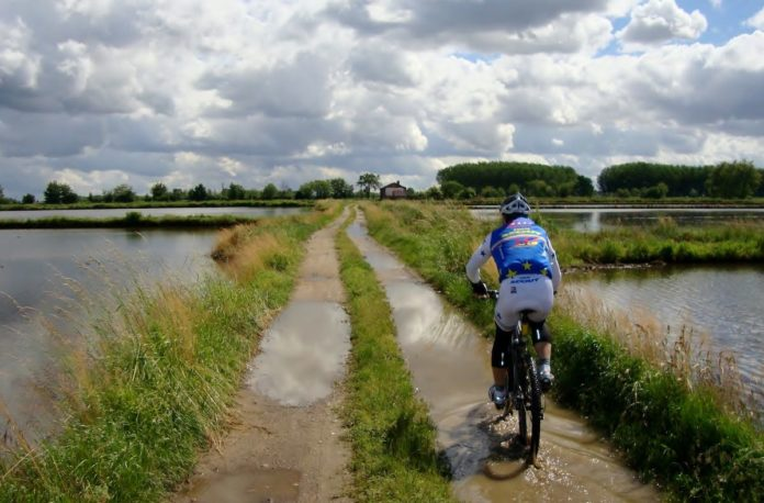 bikerumor pic of the day cycling near rice fields in northern italy.