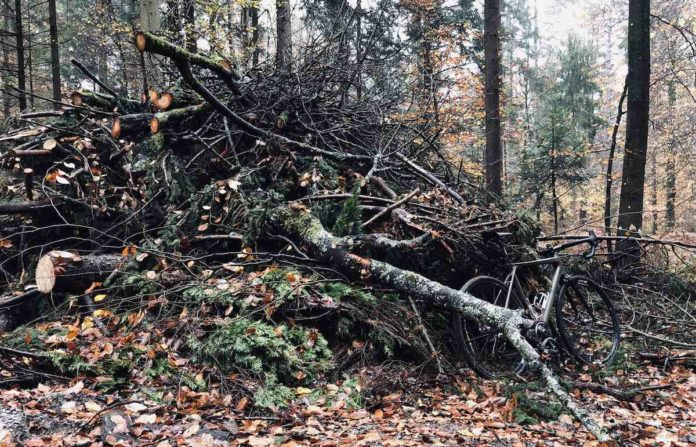 bikerumor pic of the day camo painted bicycle leaning up against a pile of cut tree limbs in the forest in ljubljana, slovenia.