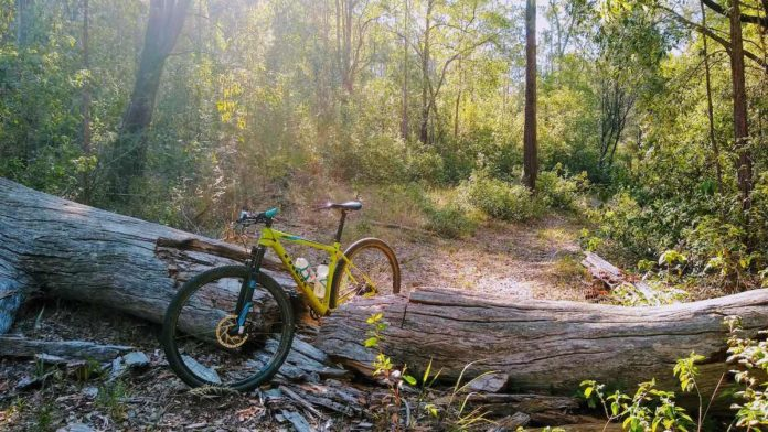 bikerumor pic of the day mountain bike perched between a broken tree stump that has fallen over a trail in the glass house mountains in queensland australia.