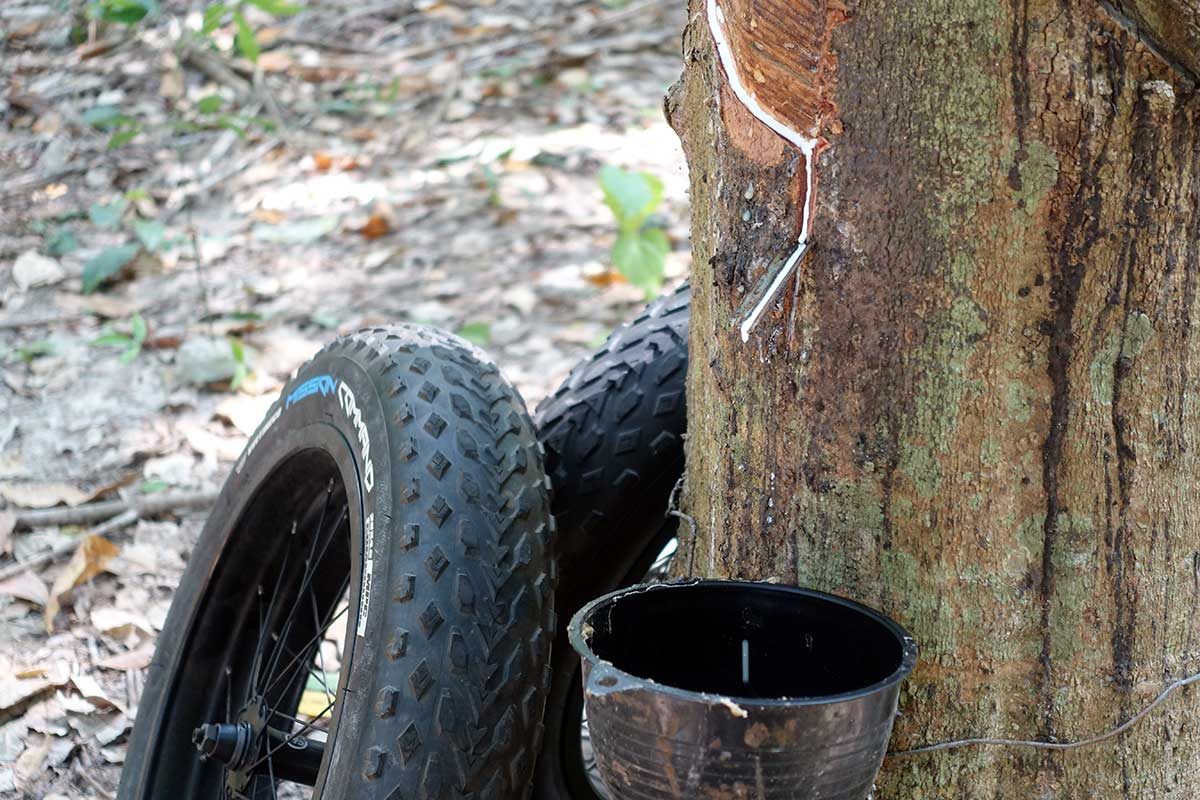 how vee tire co gets latex sap from their rubber trees to create bicycle tires