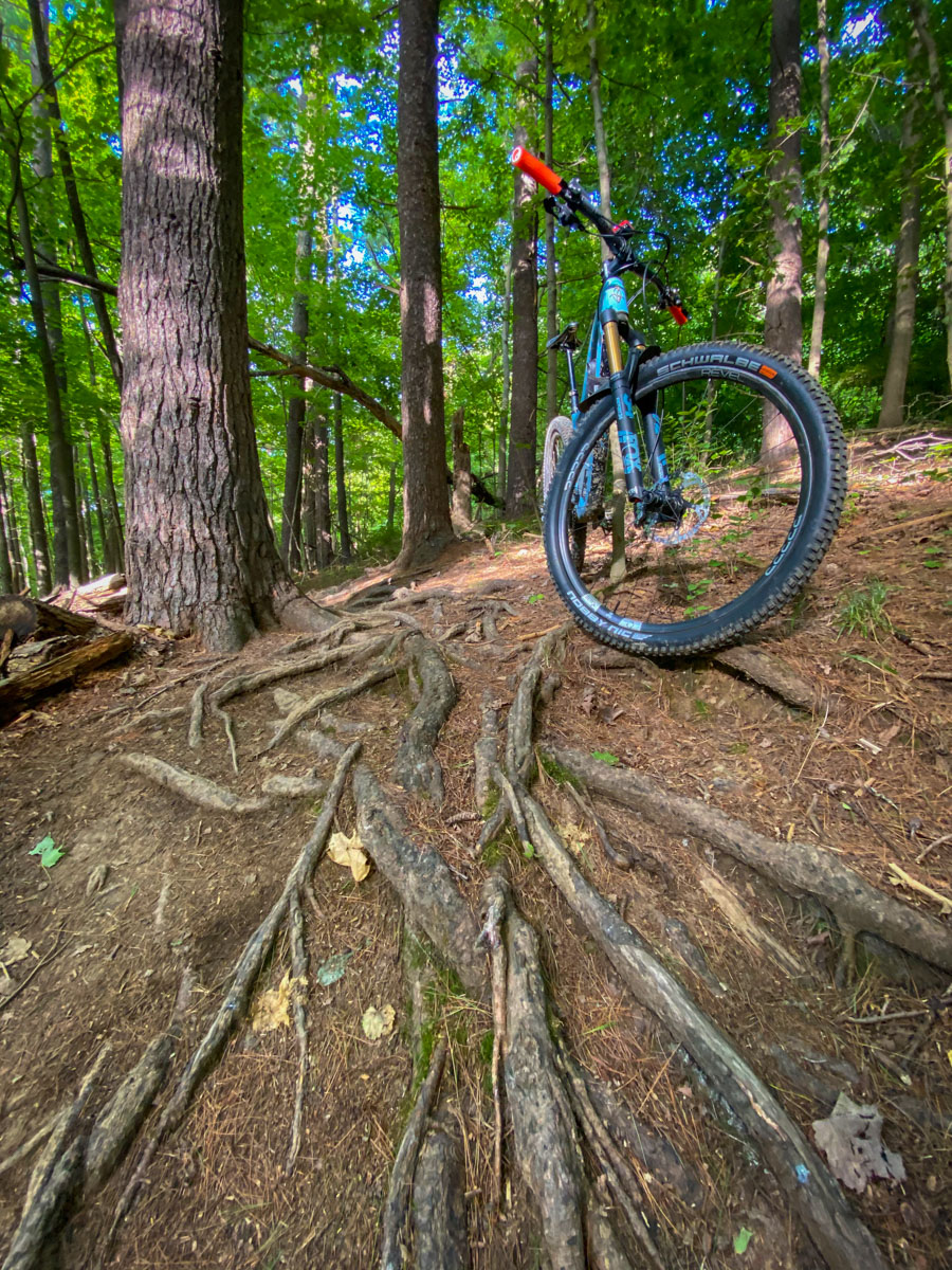 Schwalbe Decade of Super tires on roots