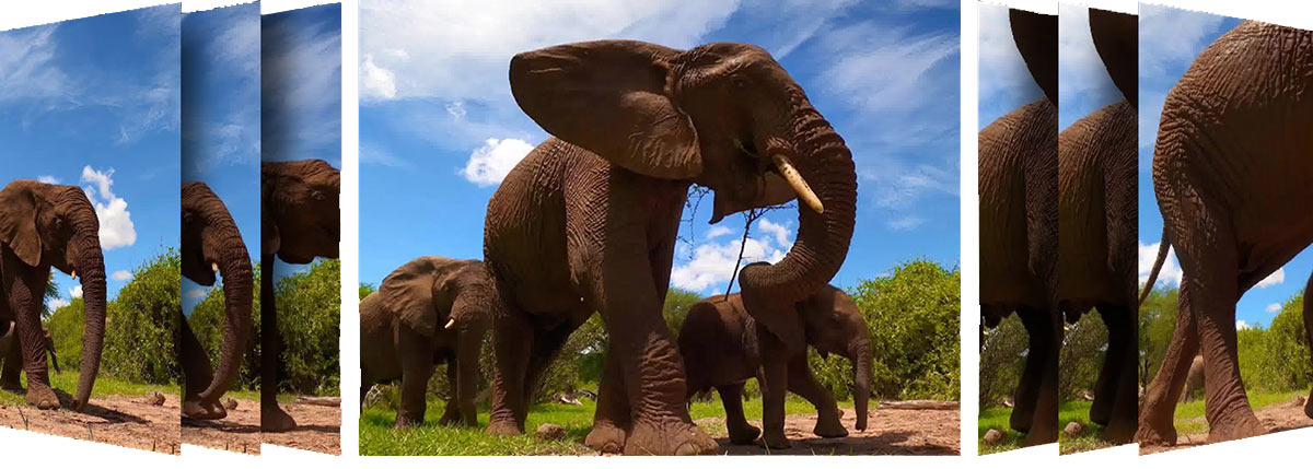 Hindsight photo sequence of elephants walking taken with the new GoPro hero9 black action camera